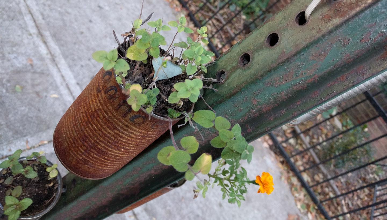 Rust Flowers