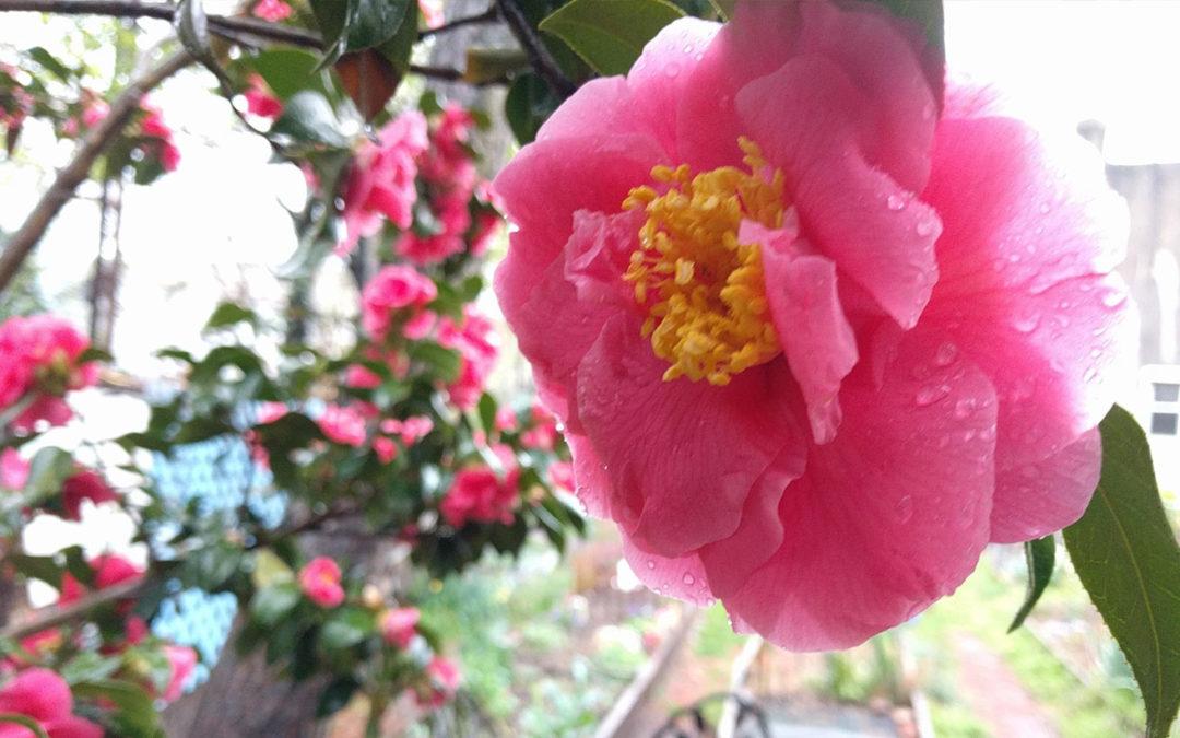 "MOMENTMichael Hogan: ""Spring"""